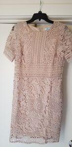 Brand New lace dress by Vici